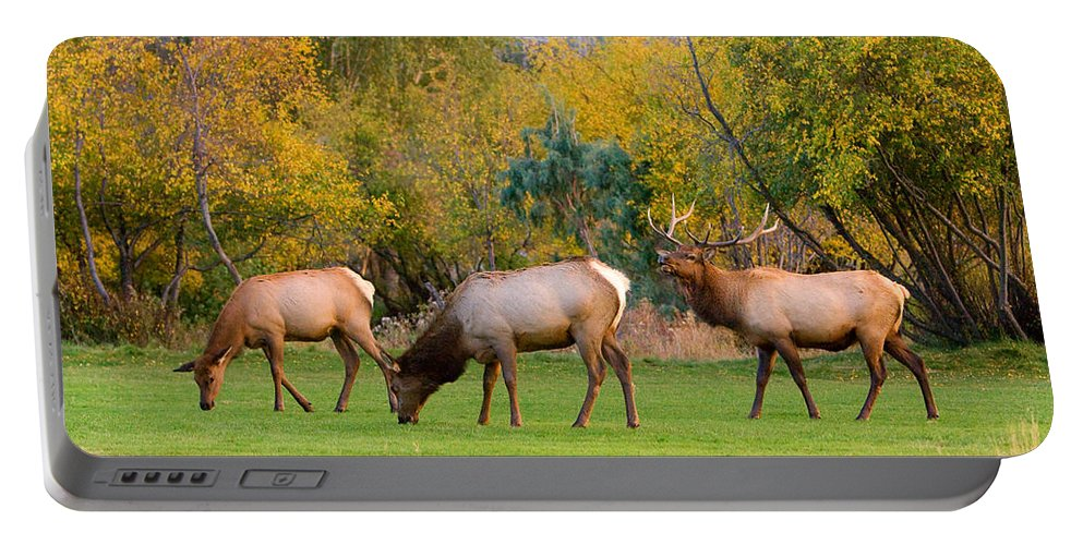 Autumn Portable Battery Charger featuring the photograph Bull Elk Bugling With Cow Elks - Rutting Season by James BO Insogna