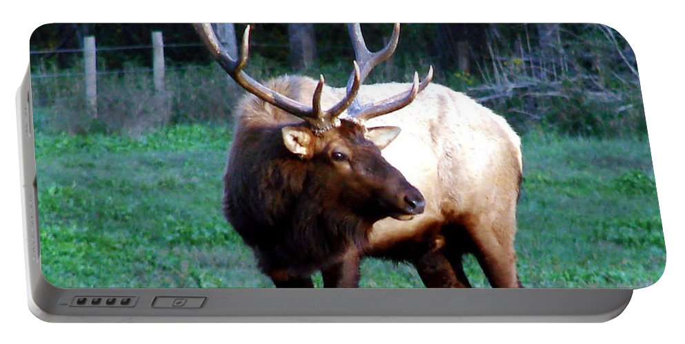 Elk Portable Battery Charger featuring the photograph Bull Elk II by Mary Halpin