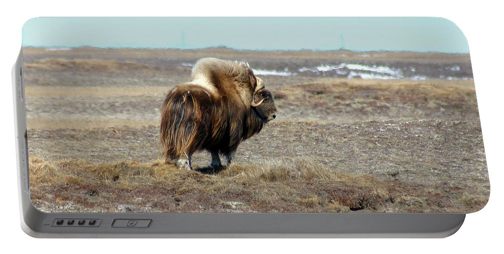 Bull Portable Battery Charger featuring the photograph Bull Musk Ox by Anthony Jones