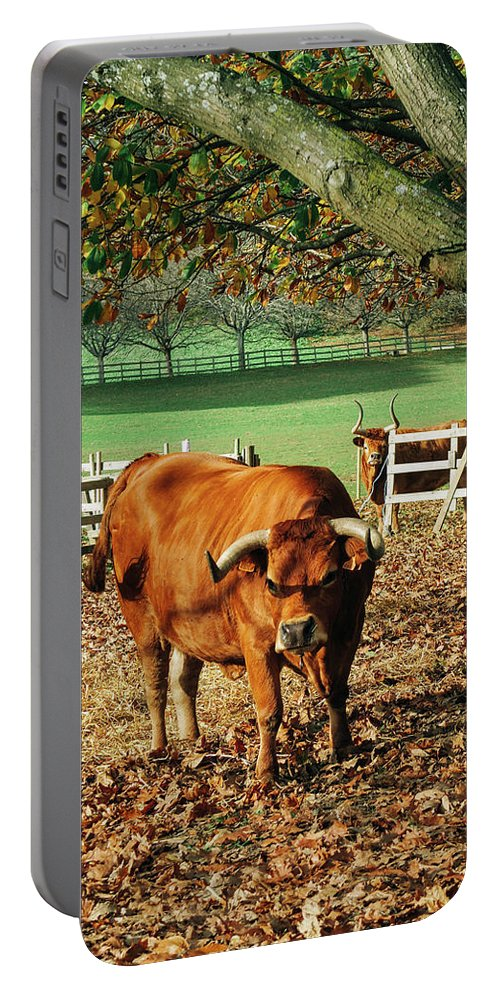 Bull Portable Battery Charger featuring the photograph Bull by Yan Motta