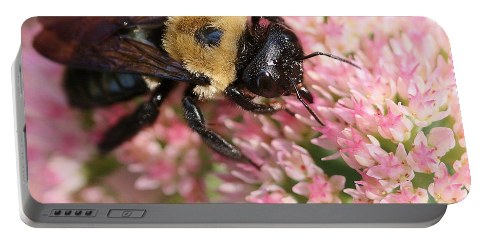 Bee Portable Battery Charger featuring the photograph Bumble Bee Macro by Angela Rath