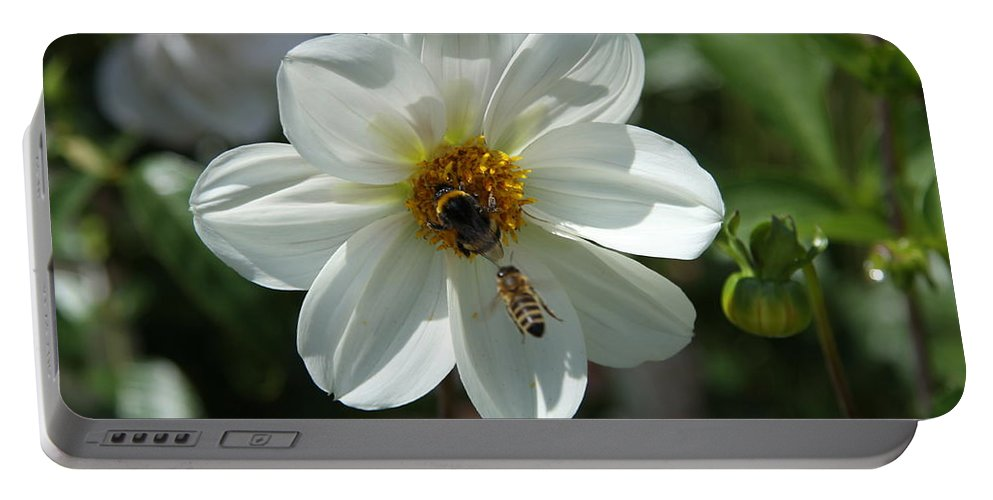 Bumblebee Portable Battery Charger featuring the photograph Bumblebee And Bee by Christiane Schulze Art And Photography