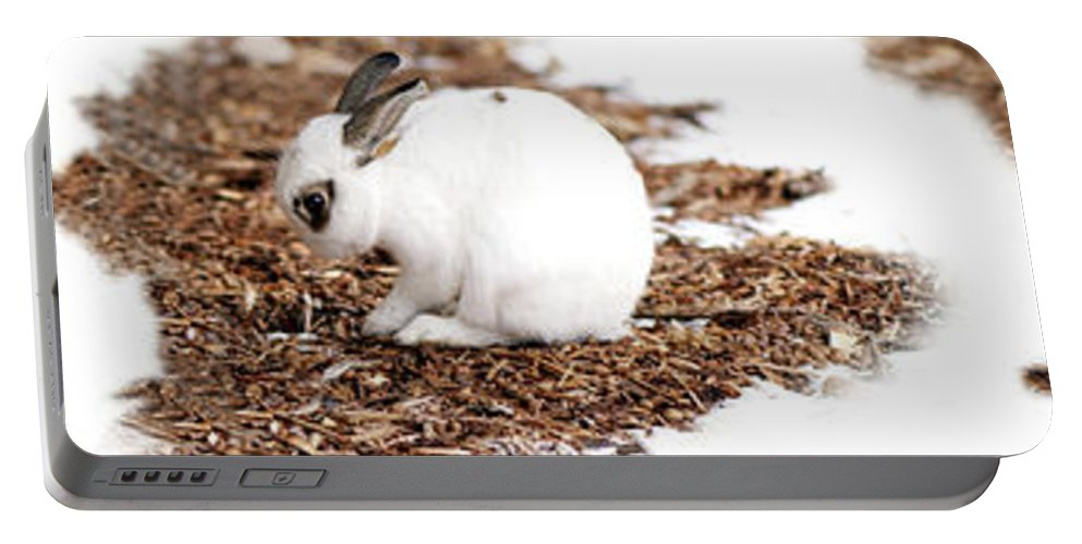 Bunnies Portable Battery Charger featuring the photograph Bunnies Three by Lisa Knechtel