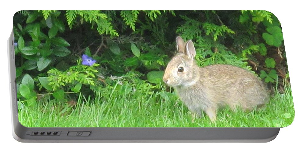 Rabbit Portable Battery Charger featuring the photograph Bunny In Repose by Ian MacDonald
