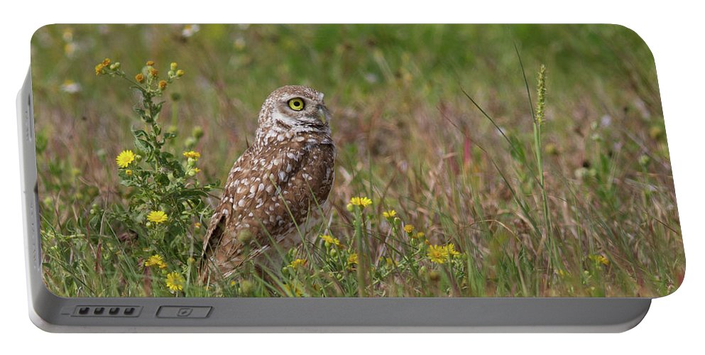 Owl Portable Battery Charger featuring the photograph Burrowing Owl And Flowers by Paul Rebmann