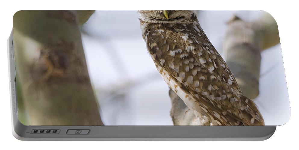Burrowing Owl Portable Battery Charger featuring the photograph Burrowing Owl Perched On A Branch by Saija Lehtonen