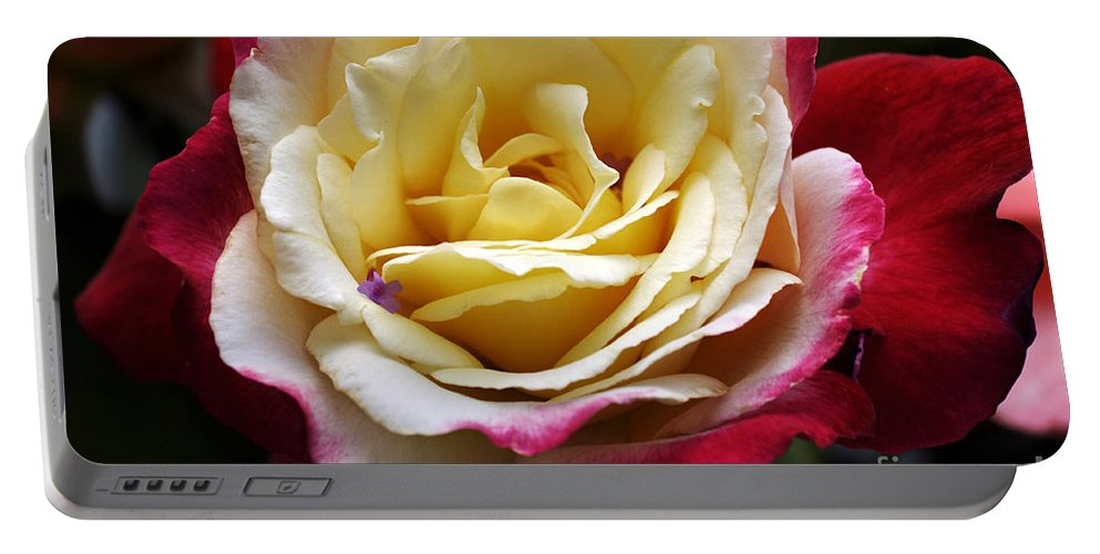 Clay Portable Battery Charger featuring the photograph Burst Of Rose by Clayton Bruster
