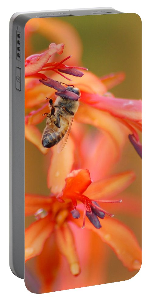 Bee Portable Battery Charger featuring the photograph Busy Bee by Amy Fose