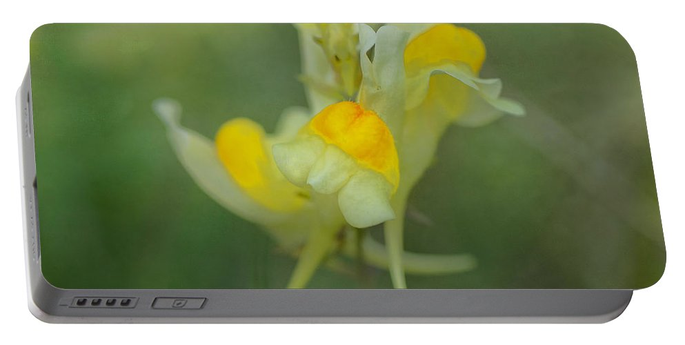 Wildflowers Portable Battery Charger featuring the photograph Butter And Eggs by Susan Capuano