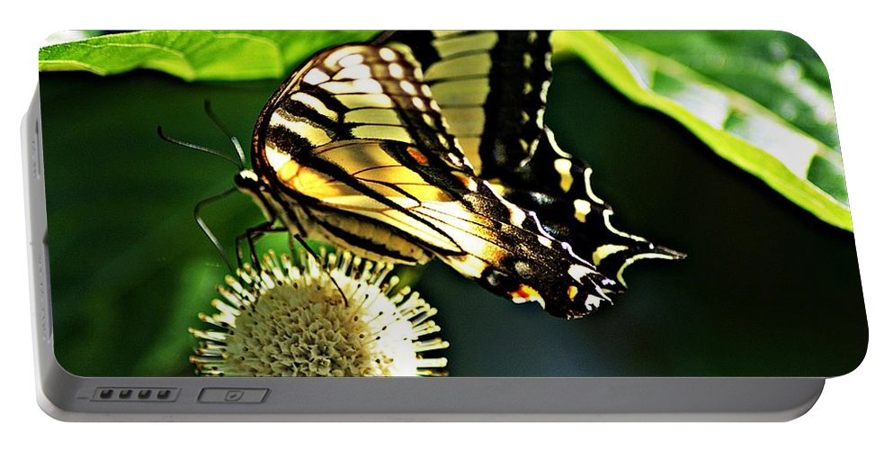 Butterfly Portable Battery Charger featuring the photograph Butterfly 4 by Joe Faherty