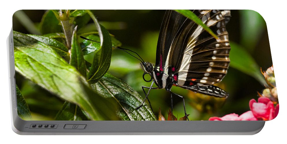 Butterfly Portable Battery Charger featuring the photograph Butterfly by Christopher Holmes