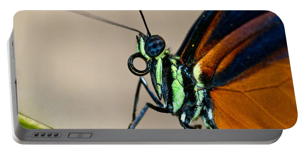 Butterfly Portable Battery Charger featuring the photograph Butterfly Closeup by Christopher Holmes