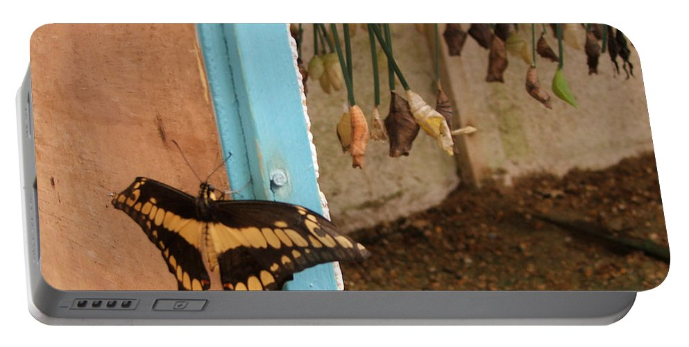 Butterfly Portable Battery Charger featuring the photograph Butterfly Drying His New Wings by Heather Lennox