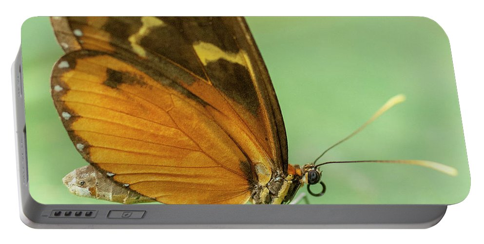 Heiko Portable Battery Charger featuring the photograph Butterfly Eueides Isabella by Heiko Koehrer-Wagner