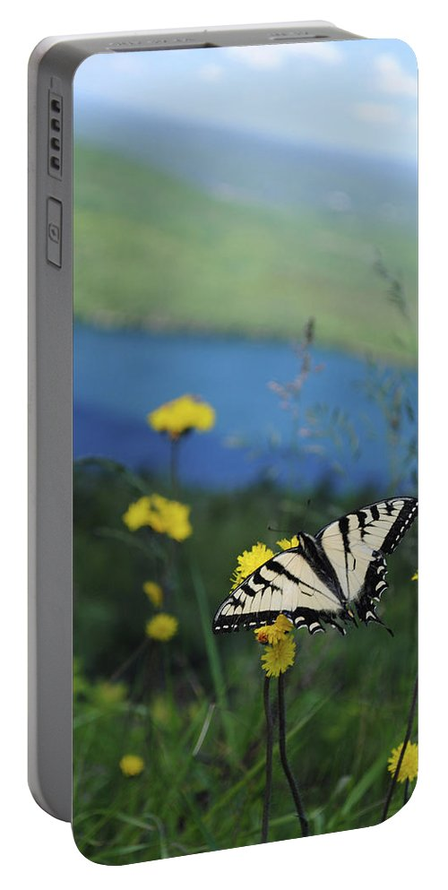 Butterfly Portable Battery Charger featuring the photograph Butterfly by Jessica Fligg
