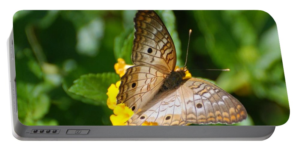 Butterfly Portable Battery Charger featuring the photograph Butterfly Land by Rob Hans
