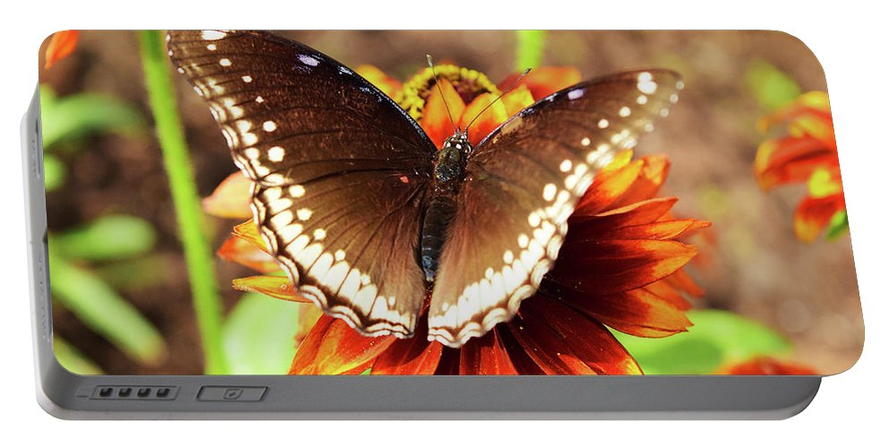 Flower Portable Battery Charger featuring the photograph Butterfly On A Sunset by Sydney Thompson