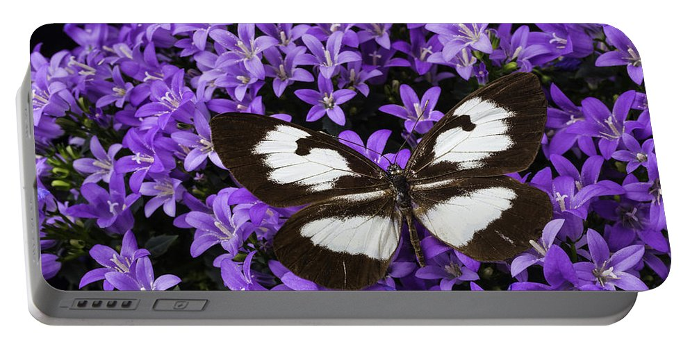 Campanula Get Mee Portable Battery Charger featuring the photograph Butterfly On Campanula Get Mee by Garry Gay