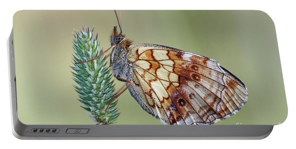 Insect Portable Battery Charger featuring the photograph Butterfly On The Grass by Michal Boubin