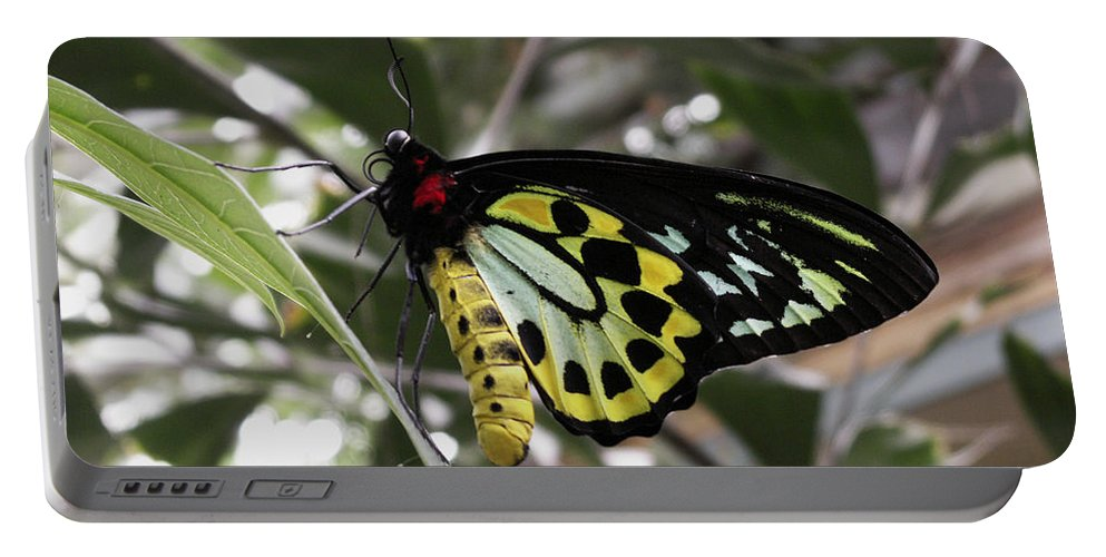Butterfly Portable Battery Charger featuring the photograph Butterfly One by Nancy Griswold