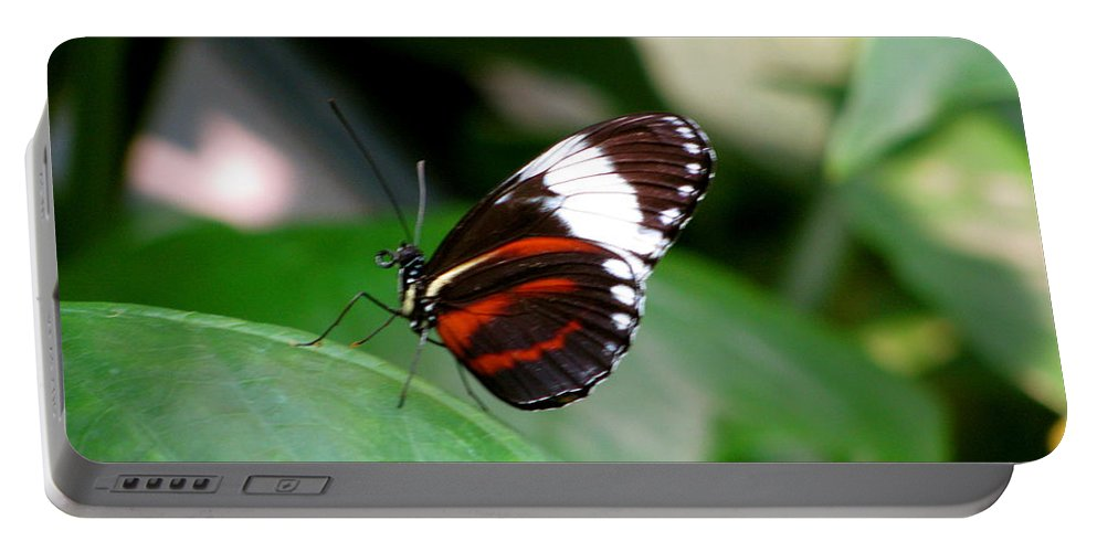 Butterfly Portable Battery Charger featuring the photograph Butterfly by Sherri Williams