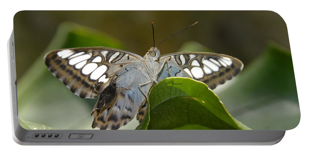 Pretty Portable Battery Charger featuring the photograph Butterfly Watching by David Lee Thompson