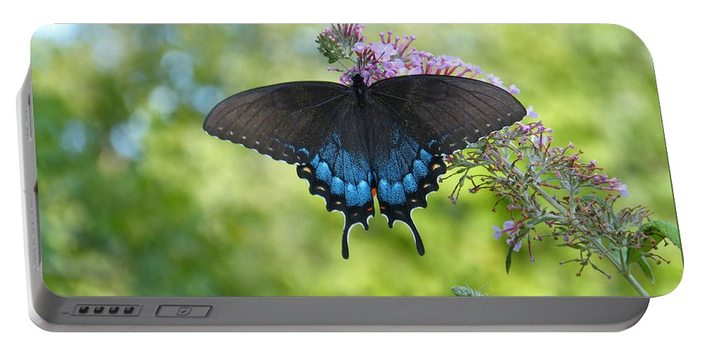 Black Swallowtail Portable Battery Charger featuring the photograph Butterfly Wish 1 by Theresa Asher