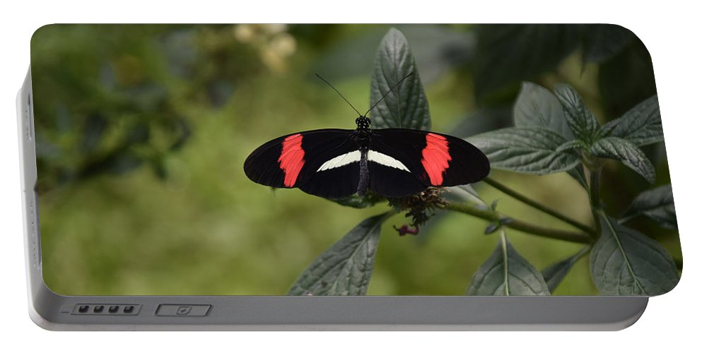 Yorks Wild Kingdom Portable Battery Charger featuring the photograph Butterfly4 by Ron Hebert