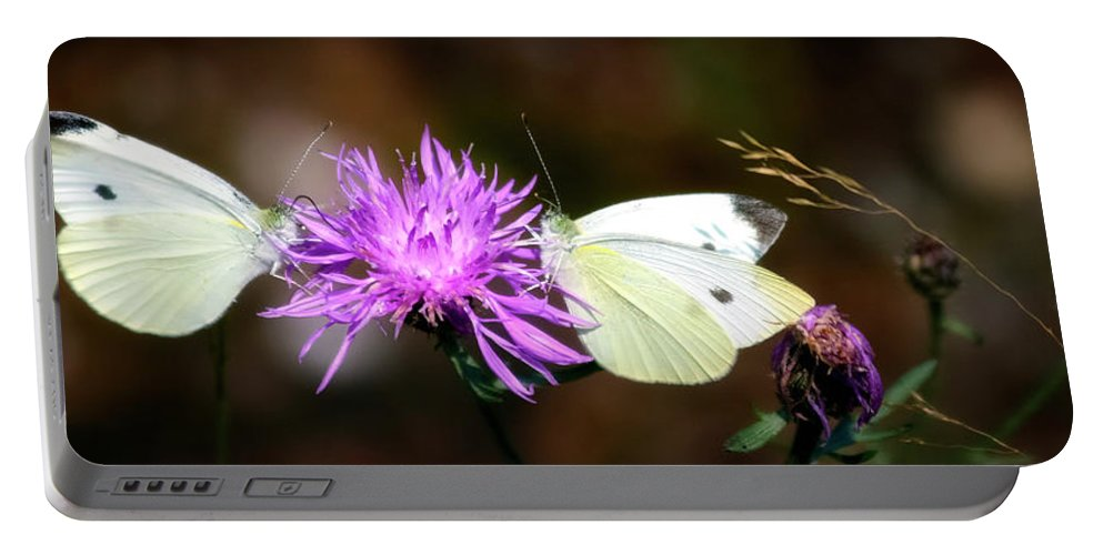 Wildlife Portable Battery Charger featuring the photograph Cabbage Butterflies On Spotted Knapweed by Albert Seger