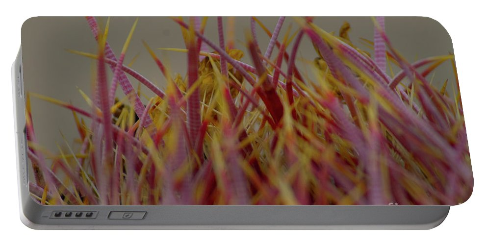 Cactus Portable Battery Charger featuring the photograph Cacti by Rod Wiens