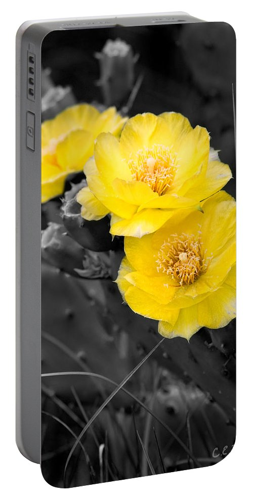 Cactus Portable Battery Charger featuring the photograph Cactus Blossom by Christopher Holmes