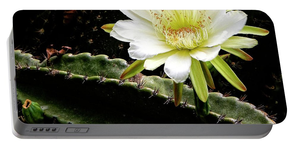 White Portable Battery Charger featuring the photograph Cactus Flower by Philip Rispin
