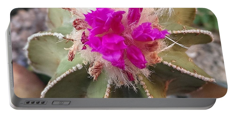 Portable Battery Charger featuring the photograph Cactus In Flower by Nick Blake