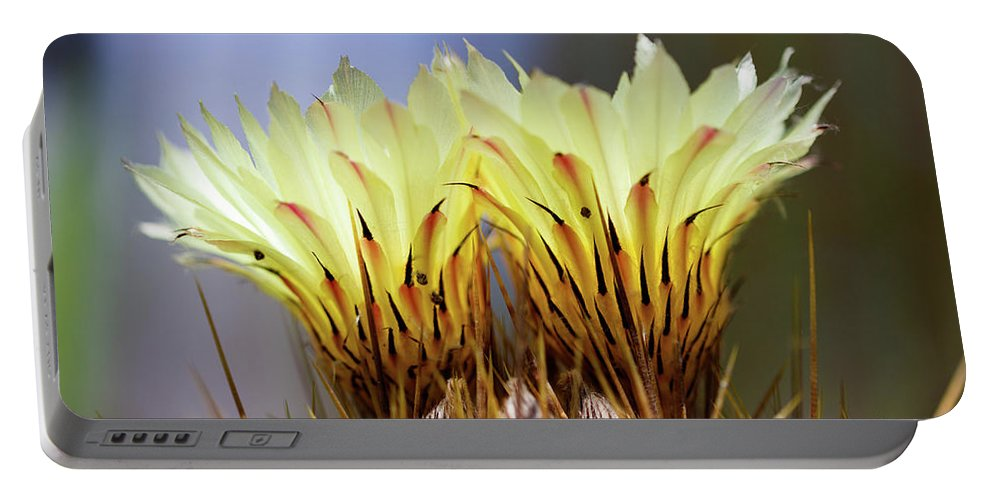 Monks Hood Cactus Portable Battery Charger featuring the photograph Cactus Life by Raul Rodriguez