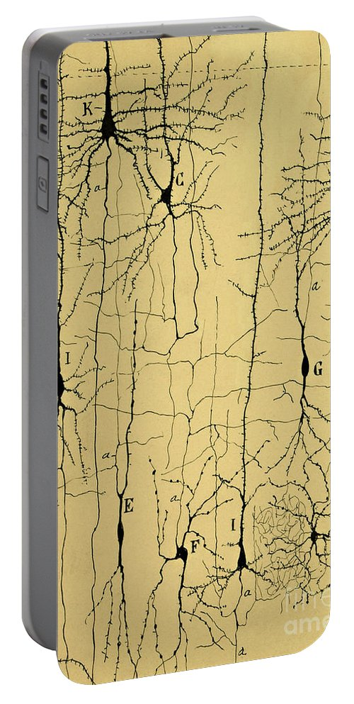 Science Portable Battery Charger featuring the photograph Cajal Drawing Of Microscopic Structure Of The Brain 1904 by Science Source