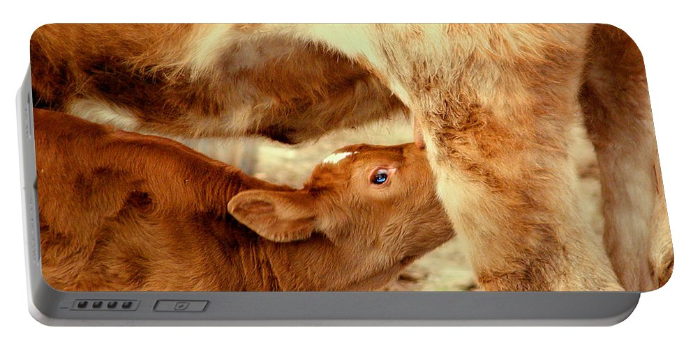 Animal Portable Battery Charger featuring the photograph Calf Feeding by Dorothy Lee