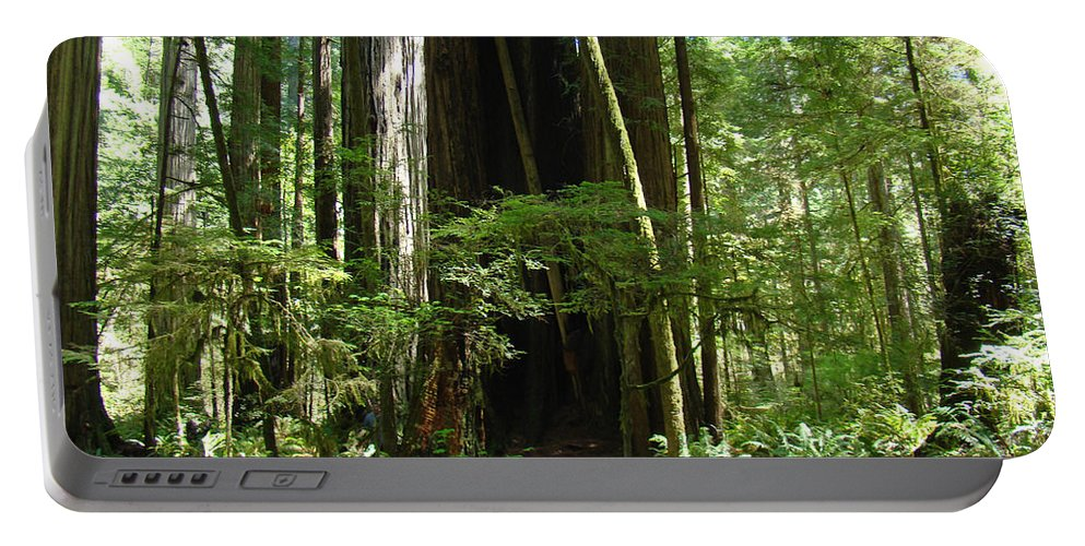 Redwood Portable Battery Charger featuring the photograph California Redwood Trees Forest Art by Baslee Troutman