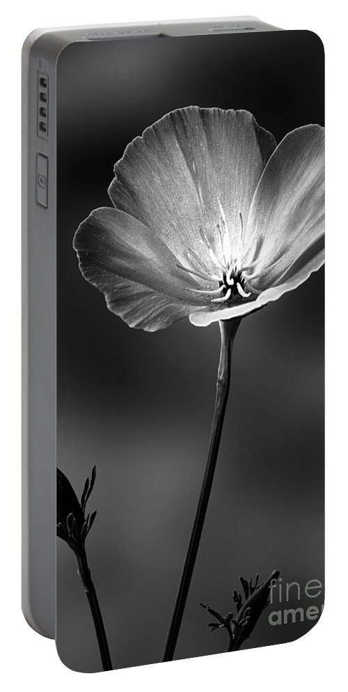 Californian Poppy Portable Battery Charger featuring the photograph Californian Poppy by John Edwards