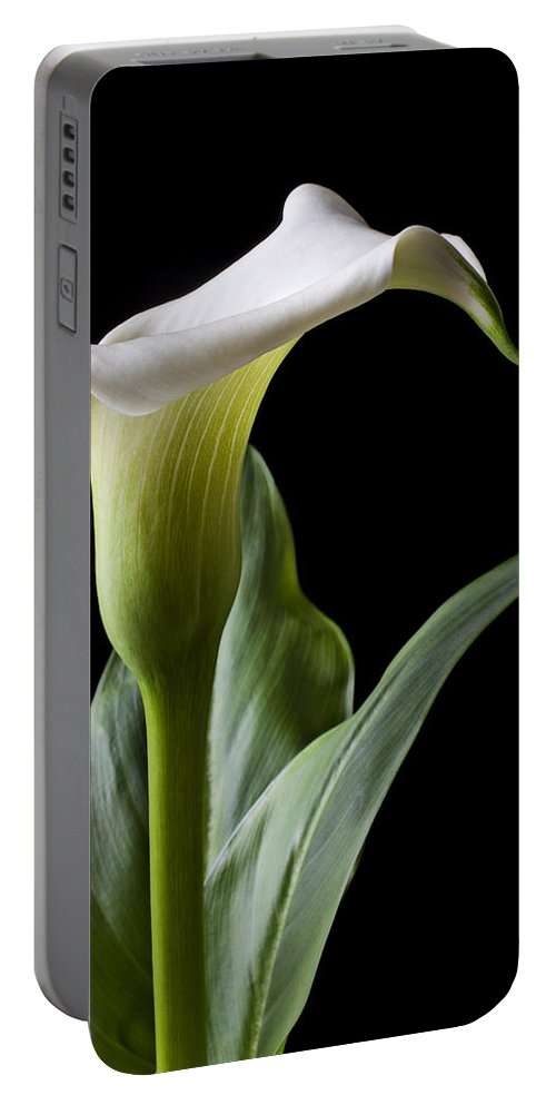 Calla Lily Portable Battery Charger featuring the photograph Calla Lily With Drip by Garry Gay