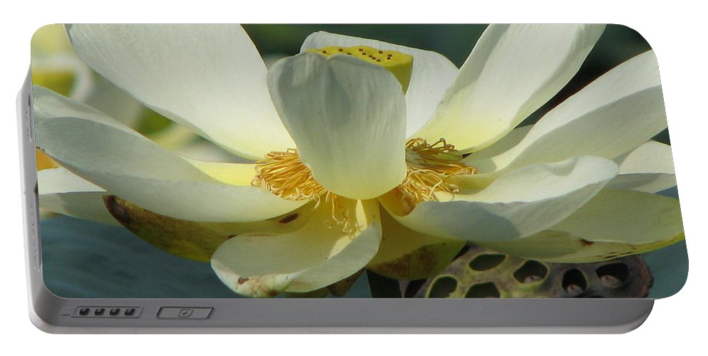 Lotus Portable Battery Charger featuring the photograph Calm by Amanda Barcon