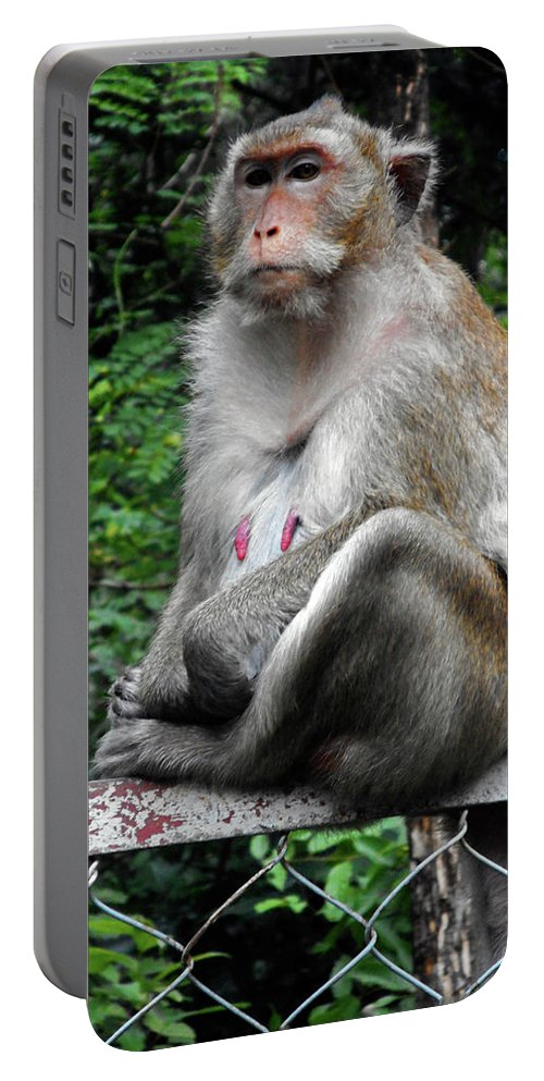 Cambodia Portable Battery Charger featuring the photograph Cambodia Monkeys 3 by Ron Kandt