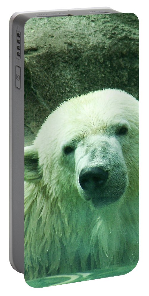 Polar Portable Battery Charger featuring the photograph Can You Hear Me Now by Trish Tritz