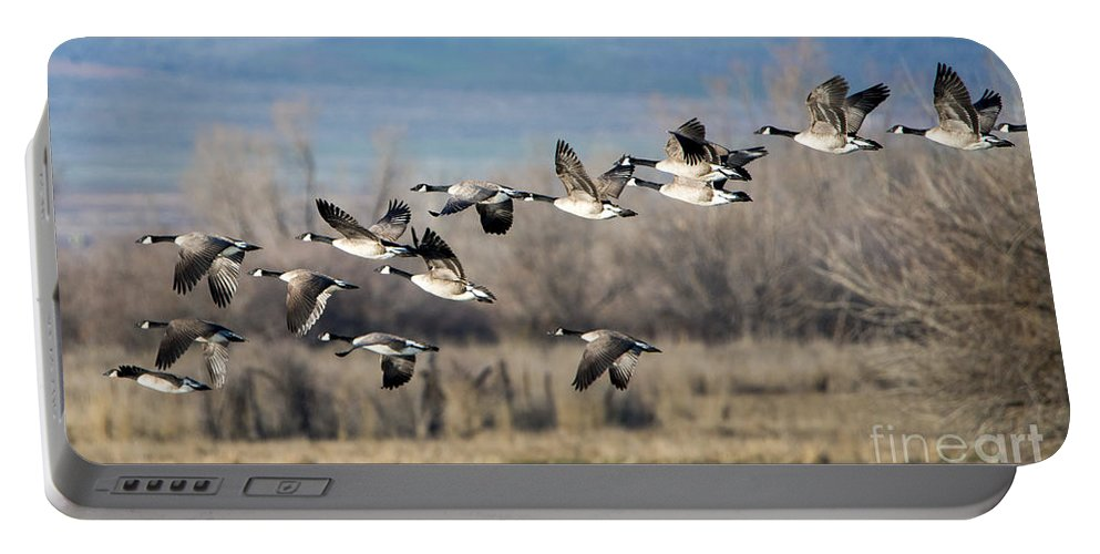 Canada Geese. Geese Portable Battery Charger featuring the photograph Canada Geese Flock by Mike Dawson