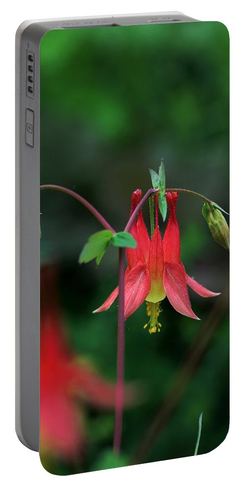 Flower Portable Battery Charger featuring the photograph Canadian Columbine by Kristina Jones