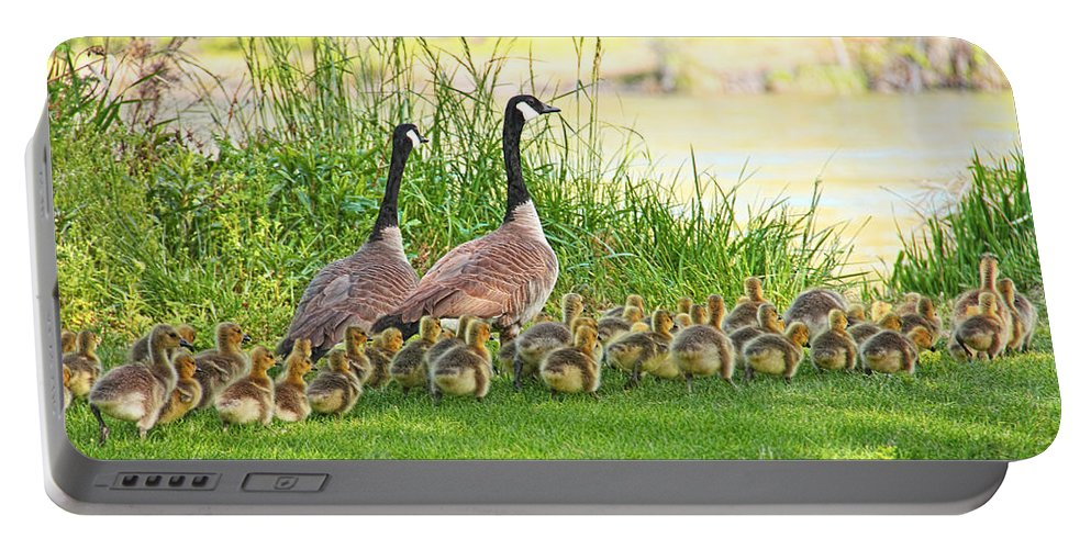 Canada Goose Portable Battery Charger featuring the photograph Canadian Geese Family by Jennie Marie Schell