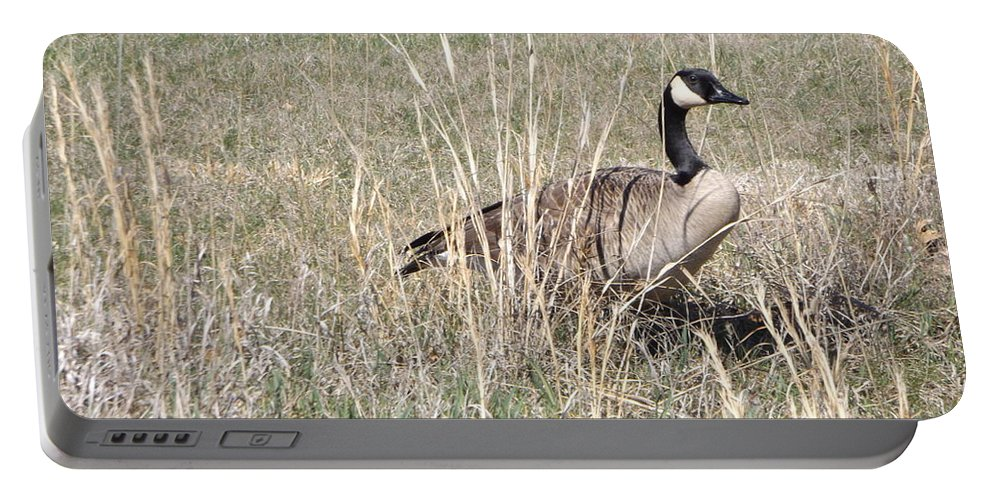 Goose Portable Battery Charger featuring the photograph Canadian Goose by Shutter Print