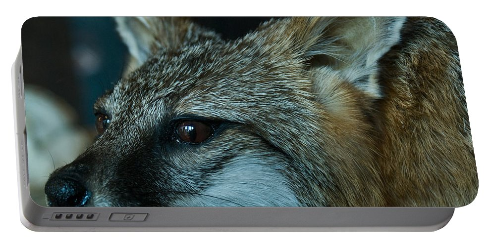 Canis Portable Battery Charger featuring the photograph Canis Species by Douglas Barnett