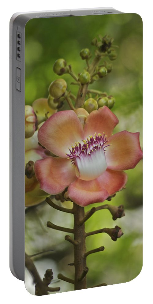 Flower Portable Battery Charger featuring the photograph Cannonball Blossom by Michael Peychich