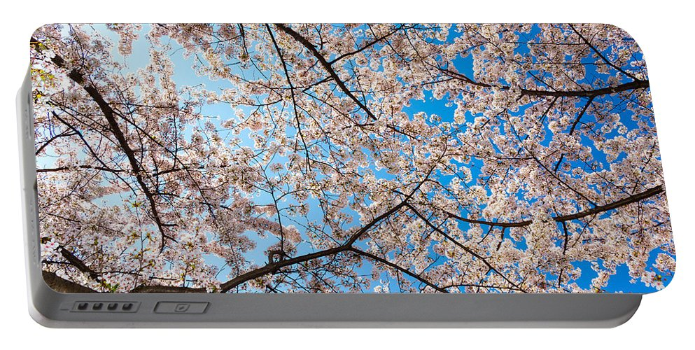 Cherry Blossom Festival Portable Battery Charger featuring the photograph Canopy Of Cherry Blossoms by SR Green
