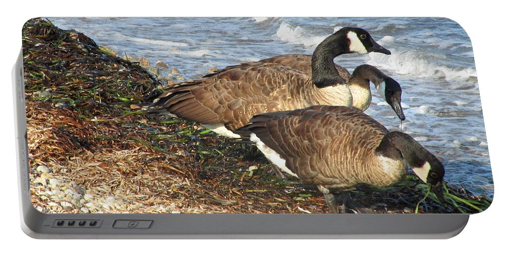 Canada Geese Portable Battery Charger featuring the photograph Cape Cod Beachcombers 1 by Mark Sellers